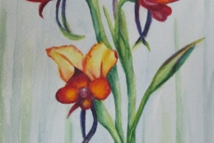 Pansy Orchids - Beth Meier